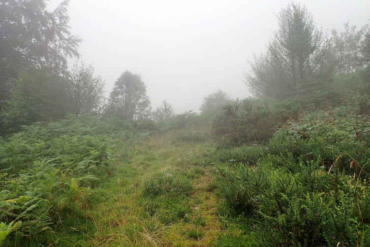 Ça se gâte... plus de sentier, de la brume... des fougères, des ronces... aucune visibilité. J'aurai peut-être du rester à la maison....