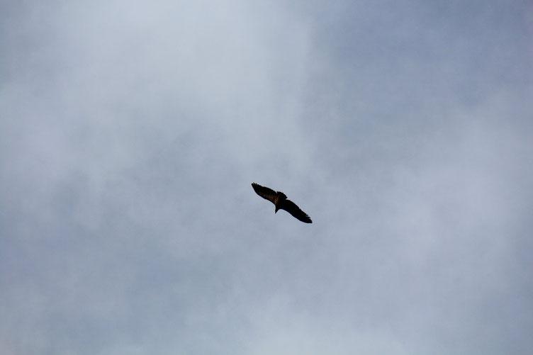 Au Pène de Béon ou Falaise aux Vautours, on y rencontre des .... vautours!