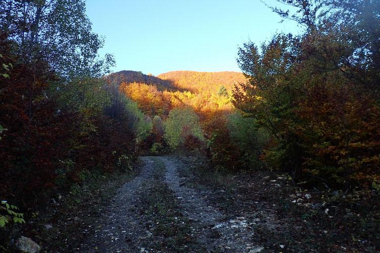 mais avec de belle clairières qui permettent d'apprécier le paysage.