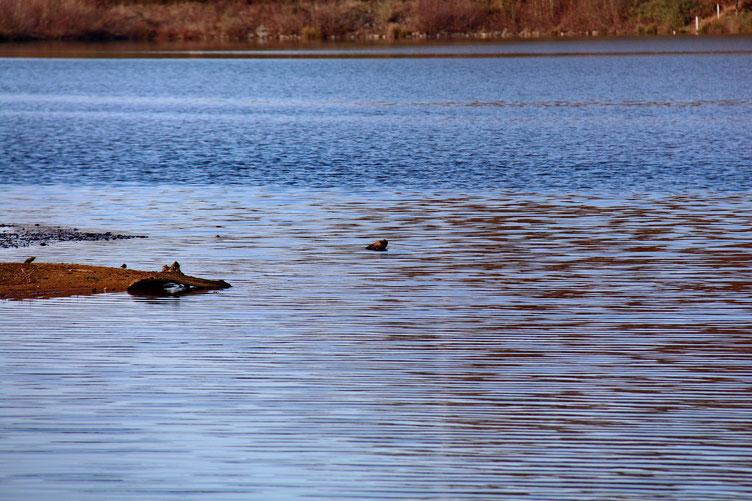 Quelques canards prenent leur bain...