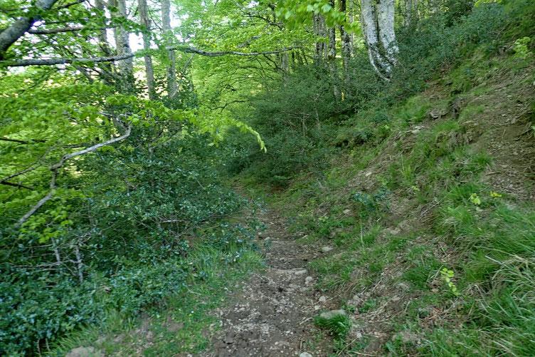 Petit passage forestier.