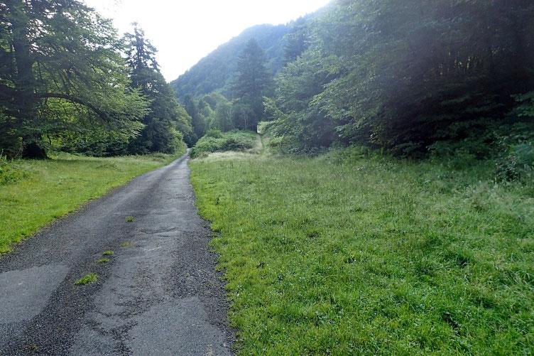 Je descend le long de la route goudronnée pour prendre la piste à droite qui mène dans les bois.