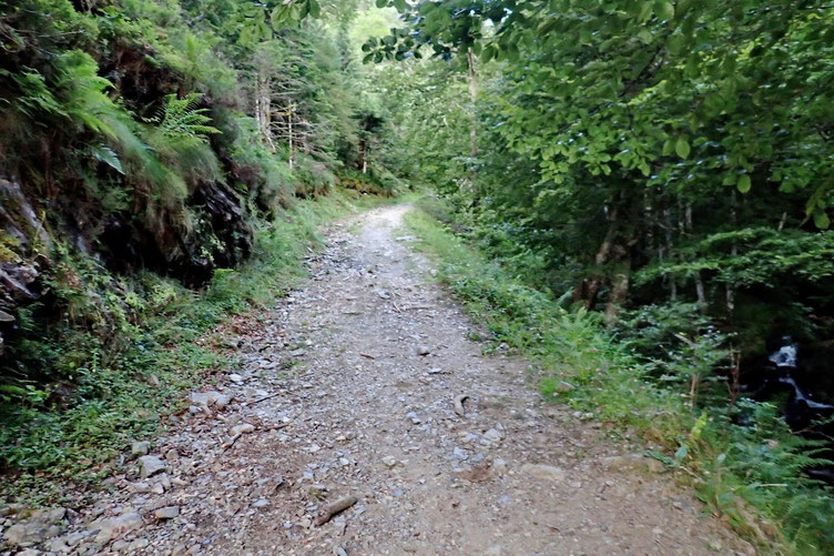 L'attaque de cette randonnée se fait par une piste déjà bien pentue...