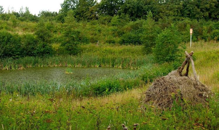 Ringelnattern-Bruthaufen am Teichufer