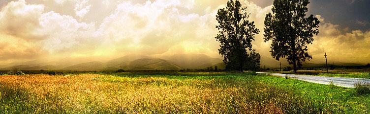 """""""Nach Regen folgt Sonne"""", sagen die Bauern. Die Imker auch!"""