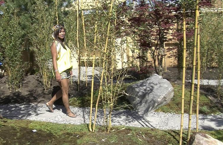 Bambus begleitet den Kiesweg. Für Japan-Gärten eignet sich der hoch wachsende Narihira-Bambus mit dem botanischen Namen Semirarundinaria fastuosa.