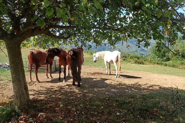 Et quelques chevaux bien paisibles.