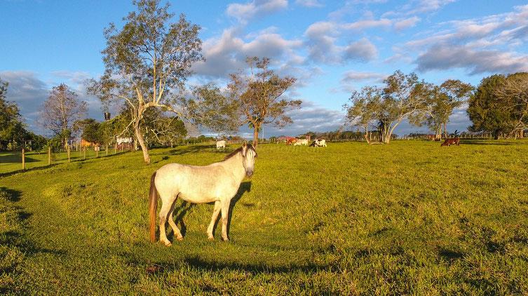 Pferdehaltung Paraguay