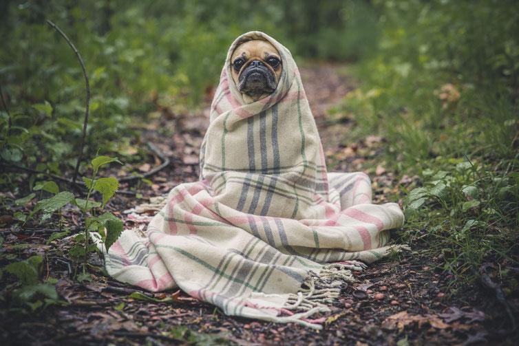 感冒的一只狗