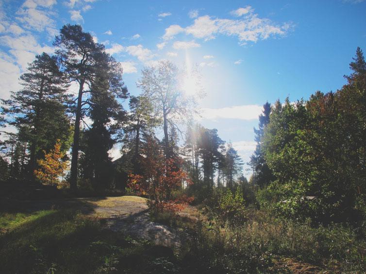 bigousteppes cabane maison forêt suède