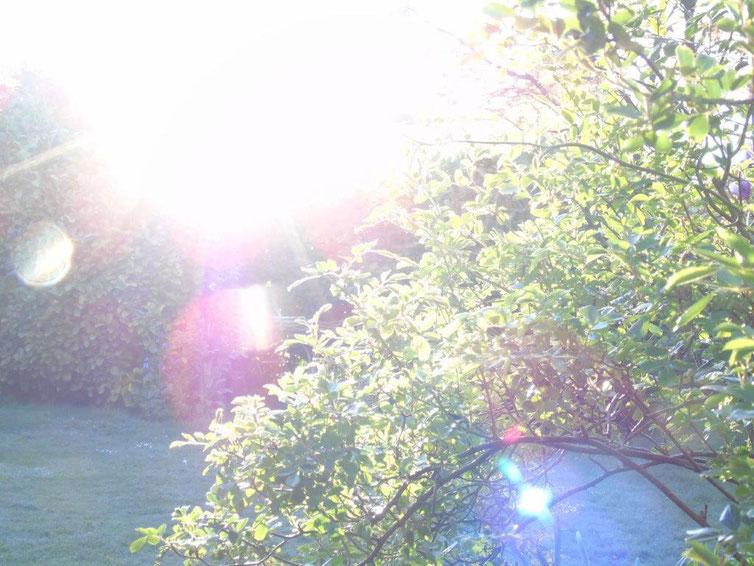 Ich bin dein Licht, Quelle; www.lichtwesenfotografie.com