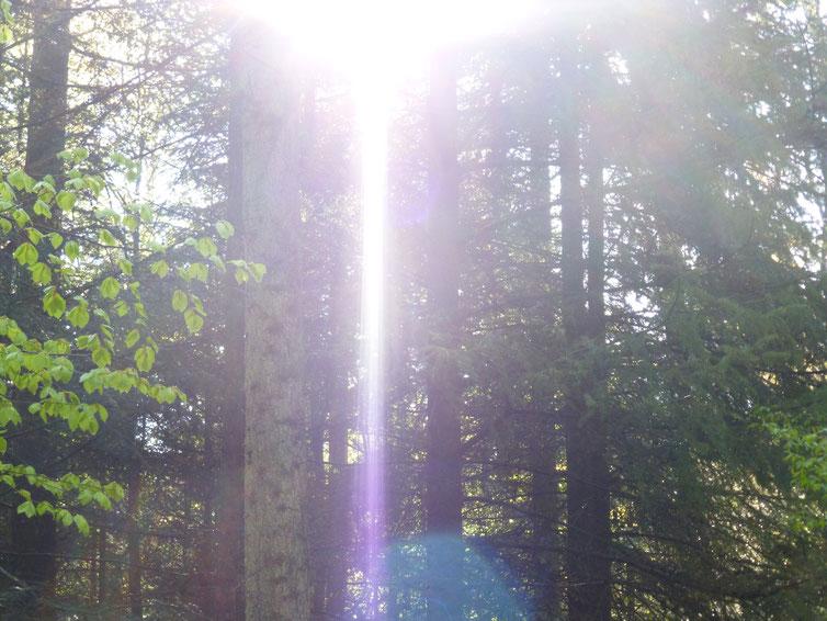 Ich bin der Morgenstrahl der Güte 3, Quelle: www.lichtwesenfotografie.com