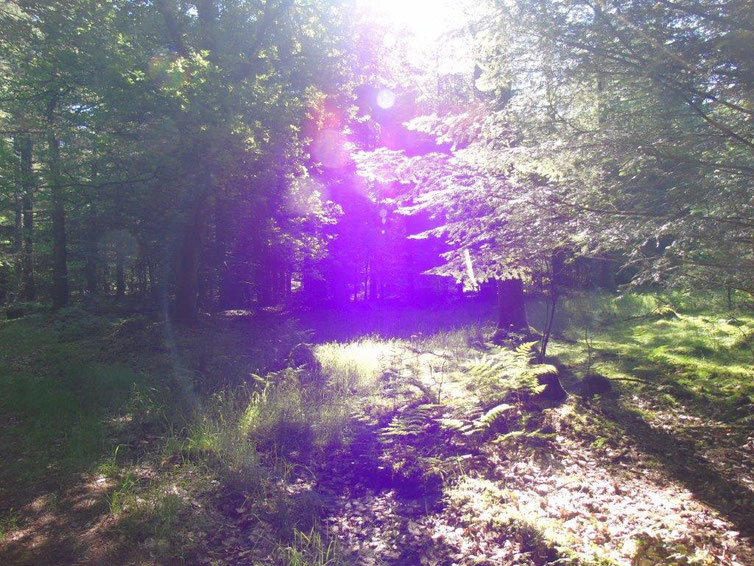 Portal, Violette Flamme der Reinigung, Energiebälle und Leuchtstab..., Quelle: www.lichtwesenfotografie.com