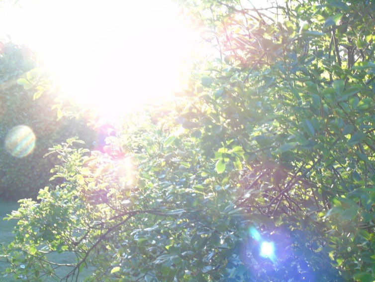 Ich bin das göttliche Morgenlicht, Quelle: www.lichtwesenfotografie.com
