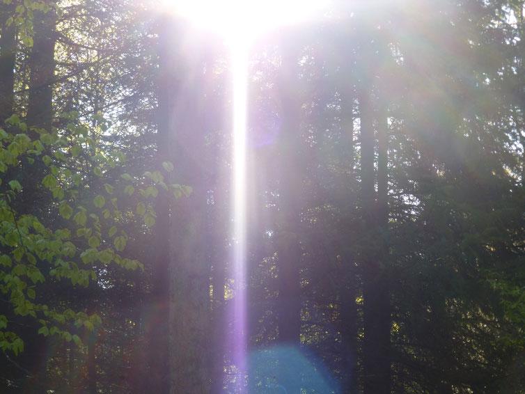 Morgenstrahl der Güte 2, Quelle: www.lichtwesenfotografie.com