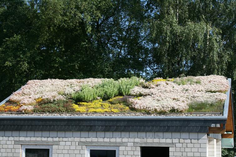 Hausdach mit Pflanzen drauf