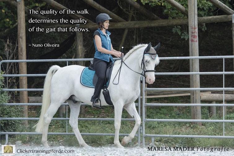 Die Qualität des Schritts bestimmt die Qualität aller folgenden Gangarten.