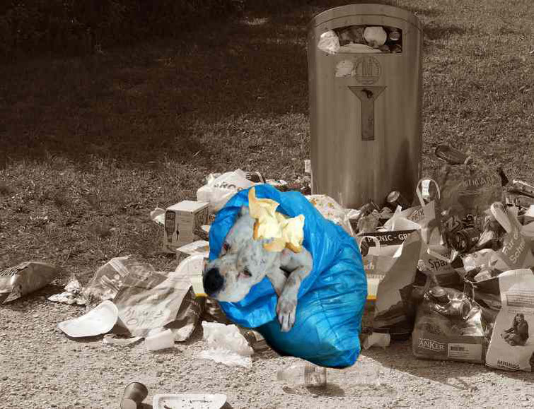 Hund, entsorgt, Müll, Weihnachtsgeschenk