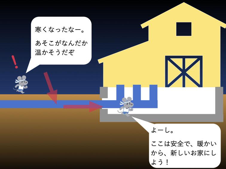 ネズミが配管周りから家屋へ侵入する過程