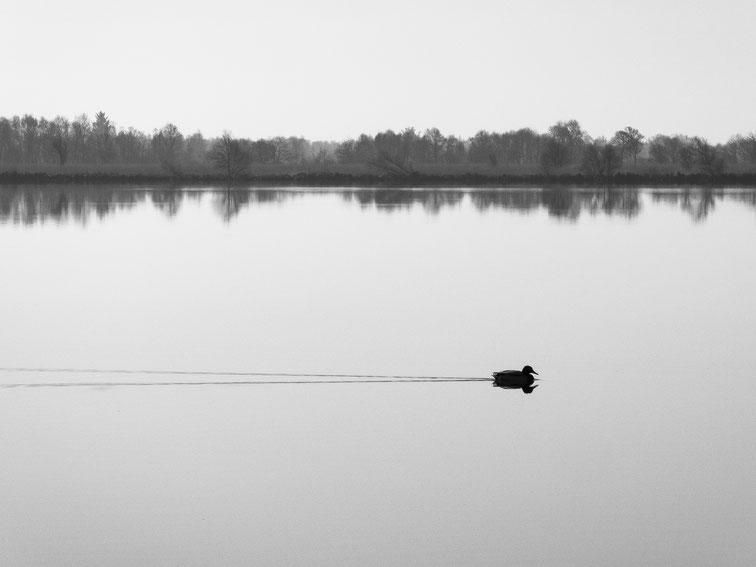 On Tour, Allein, See, Naturschutzgebiet, Ente, monocrom, schwarz-weiss, black and white, duck, reservat, Schwarzweissfotografie, kreative Fotografie, Fototipps