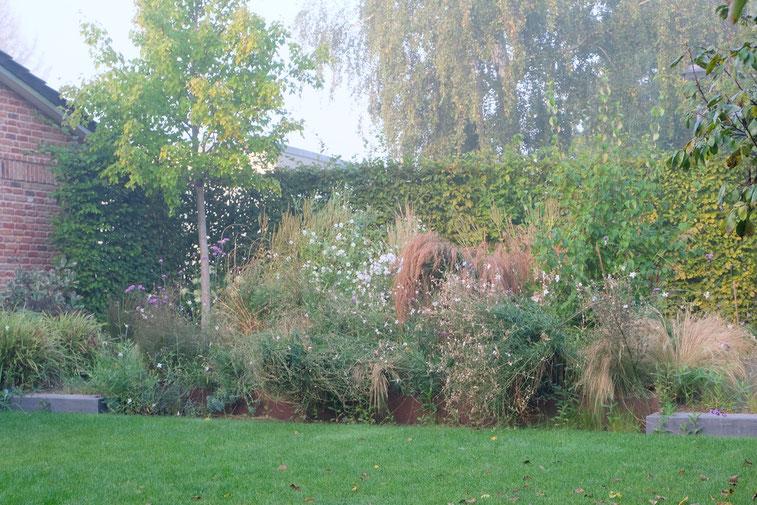 dieartigeGARTEN // Nebel im Herbstgarten - Wildes Steppenbeet + Buchenhecke + Ahorn