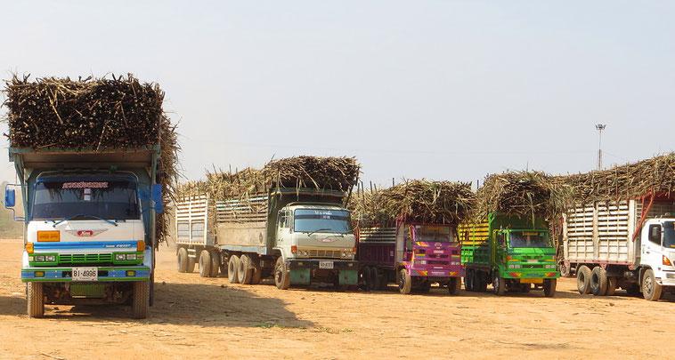 Schwer beladen mit Zuckerrohr sind z.Z. viele Lastwagen unterwegs.