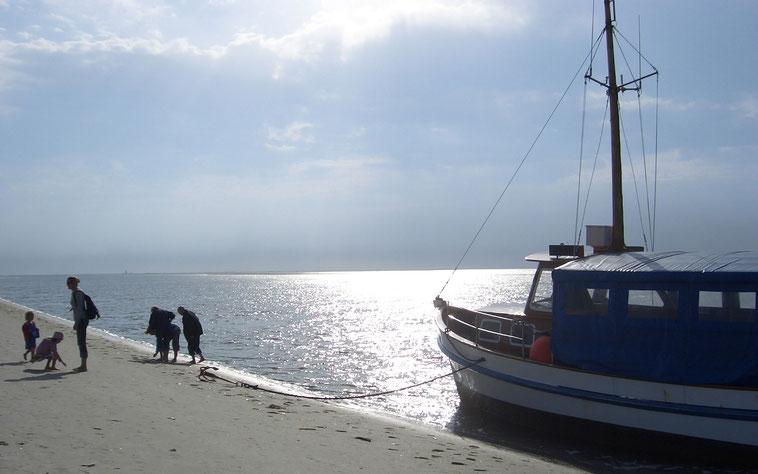 """Das Ausflugsschiff """"MS Gebrüder"""" hat auf Norderoog-Sand angelandet"""