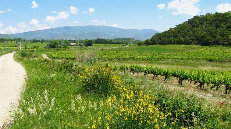 Geheimtipps: Mit Wohnmobil in die Provence, Frankreich Urlaub
