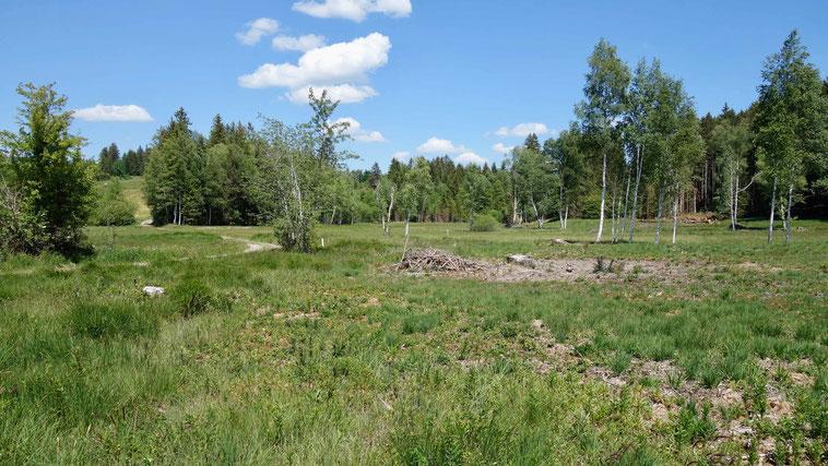 Naturschutzgebiet Widdumer Weiher