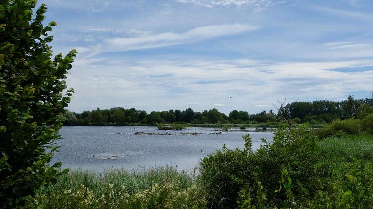 Schlingener See