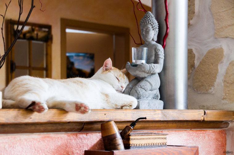 Buddha-Kater 4 | visovio 072015