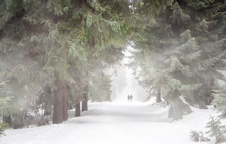 Regelmäßige Bewegung beugt Winterspeck vor. Am besten täglich und an der frischen Luft.