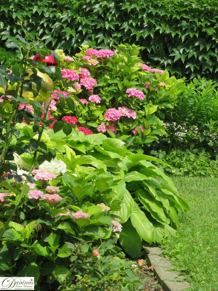 Sommergarten - blühende Hortensien in verschieden Farben