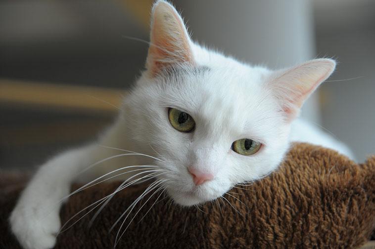 Ein Gast unseres Katzenhotels