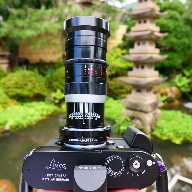 Leica M-P type240 ライカ タンバールM F2.2/90mm Leica Thambar M F2.2/90mm バラ