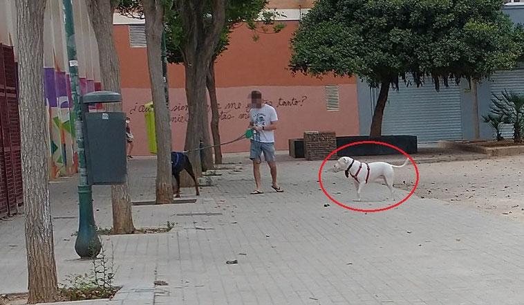 Perros sueltos y sin bozal, heces sin recoger y suciedad y peligro para la salud en la Ciudad de Valencia.