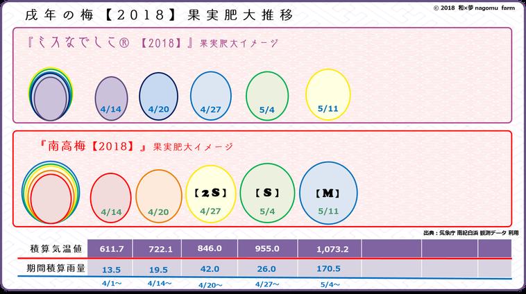 戌年の梅【2018】果実肥大推移イメージ【立夏:5/10】 和×夢 nagomu farm