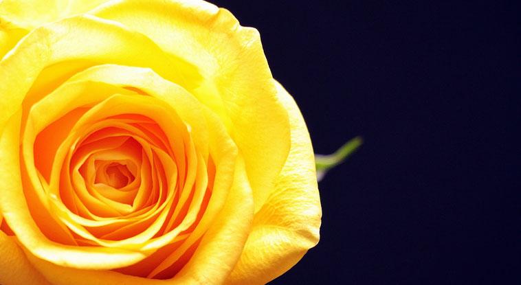 In Gottes Augen bist Du ein wertvolles und überaus schönes Geschöpf. https://www.freudenbotschaft.net/trost/