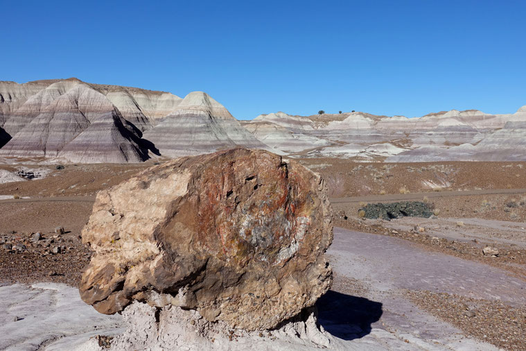 Im Petrified Forest NP