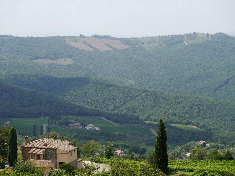 Wälder, Weinberge und weite Blicke übers Land