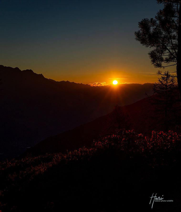 Alpenrosenglühn ( Sonnenaufgang Richtung Vinschgerunterland )