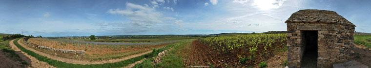 Beaune Clos-des-Mouches début juin
