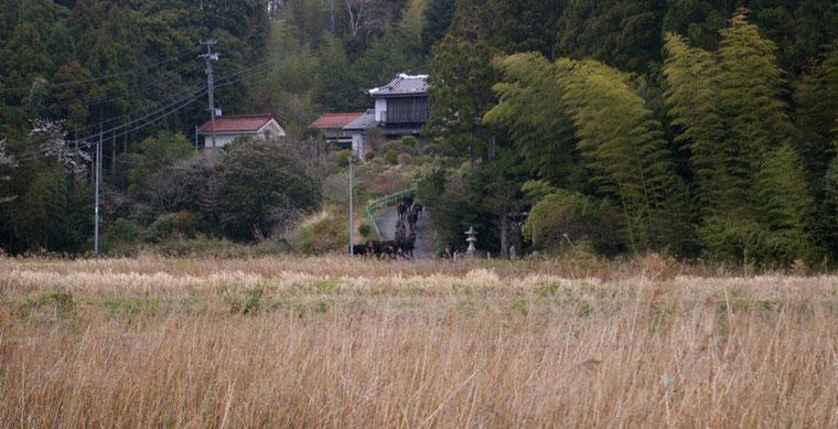 祖母の墓参りに向かう際に、牛の大群と遭遇。行き場を失った動物たちが街をさまよった。