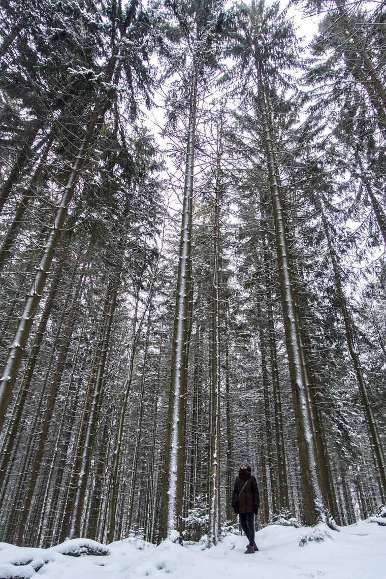 parc bayerischer wald avis