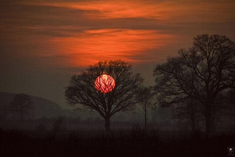 projekt flyinglandscape sonnenbaum | www.visovio.de fotografie und fotokunst | sonne baum mystisch