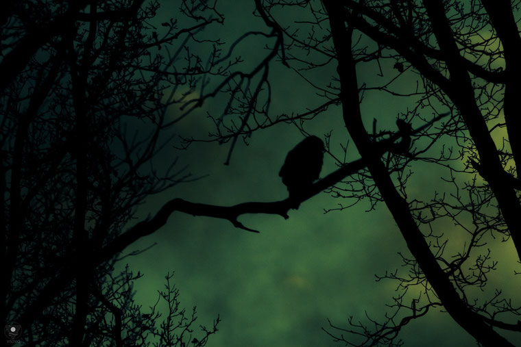 projekt flyinglandscape  the keeper| www.visovio.de fotografie und fotokunst | silouette schatten greifvogel wächter