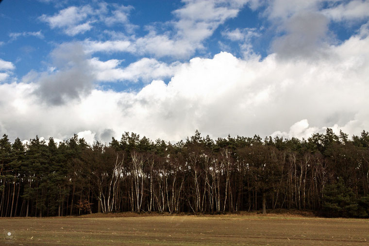 projekt flyinglandscape kreis steinfurt III| www.visovio.de fotografie und fotokunst | feld wald wolken birken grenze bruch