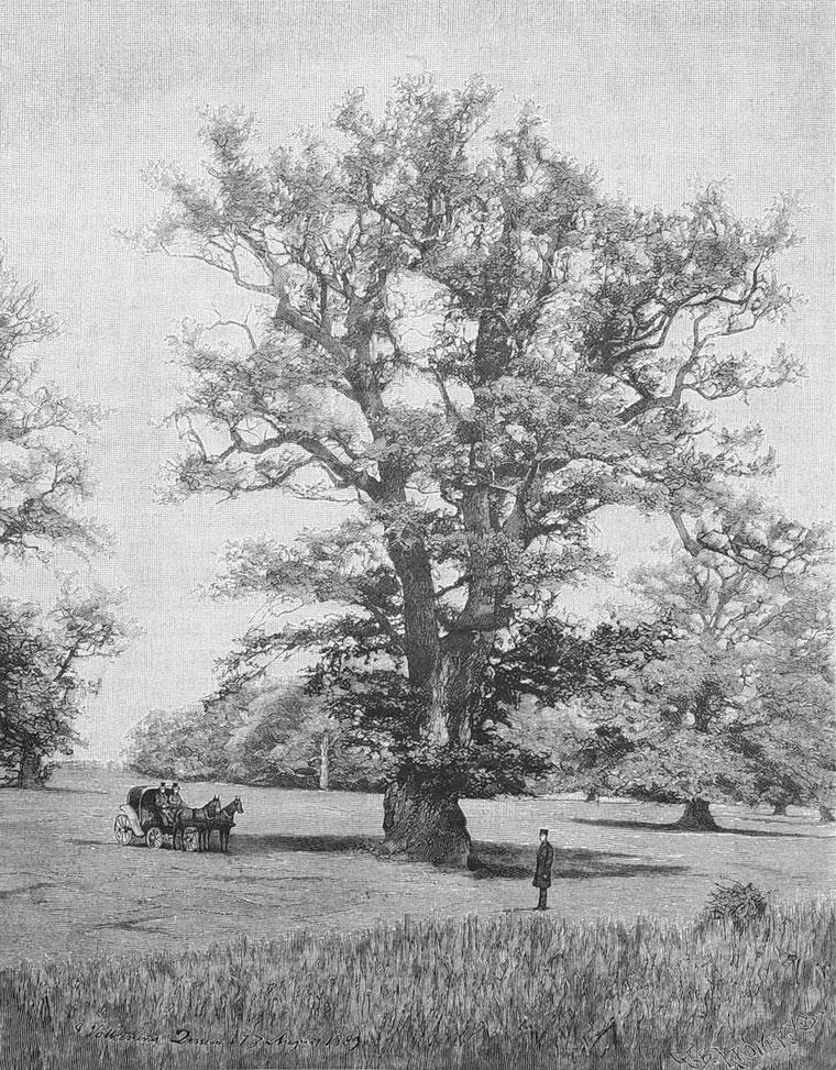 Die große Eiche auf der Rosenwiese bei Wörlitz, Holzstich von 1889, aus der Gartenlaube