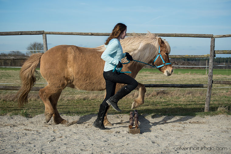 Kinderkurse, reiten lernen, Kinder reiten, Umgang mit dem Pferd, Reitvorschule in Gauting, Pferde verstehen, Kinder und Pferde, Pony