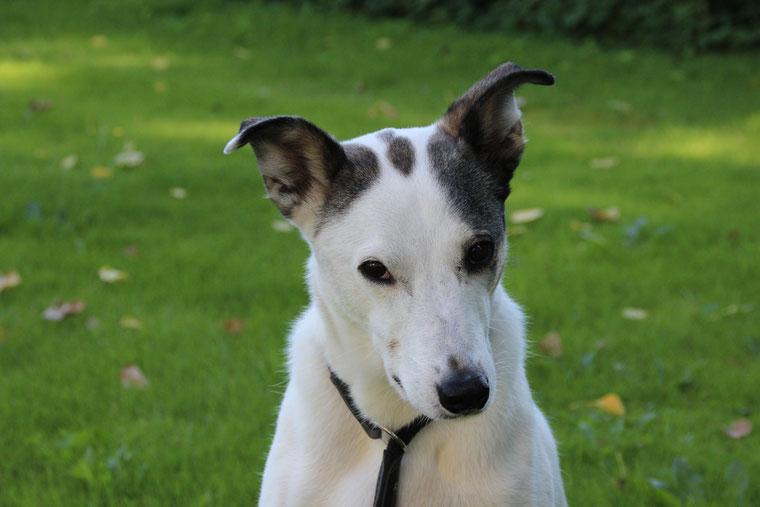 Bild: Joey hat etwas Tierschutzrelevantes zu melden; Smeura Rumänien, Tierhilfe Hoffnung, Tierheim Bielefeld